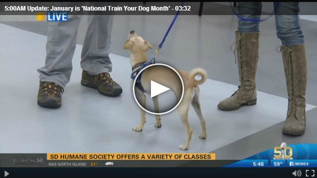 January is 'National Train Your Dog Month'